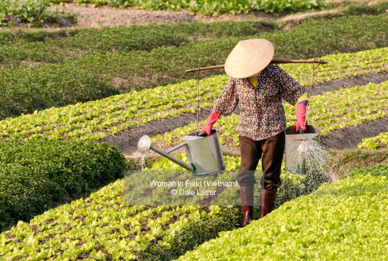 Woman in Field (Vietnam)