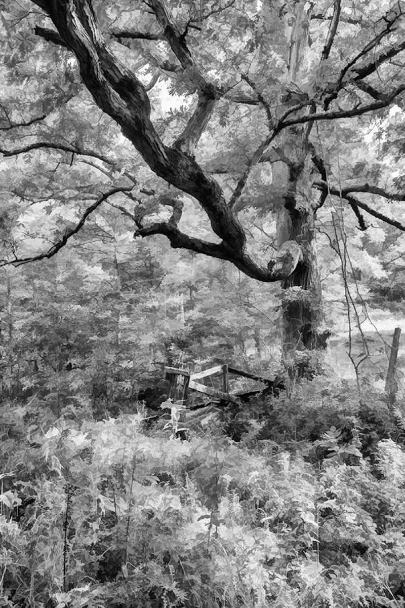Tree Near Town Creek