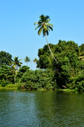 Coconut Country