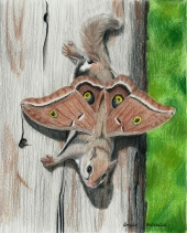Flying Squirrel Fae