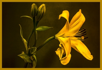 painting titled A Posing Lily